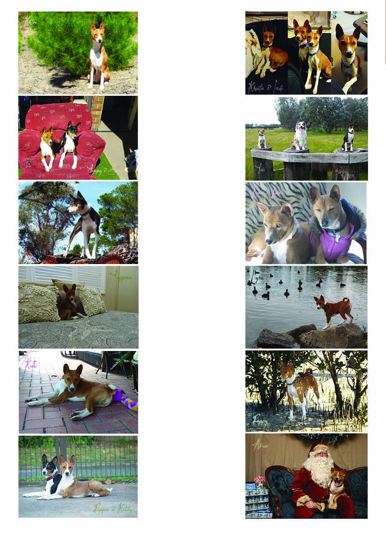 Basenji Calendar 2016 Images
